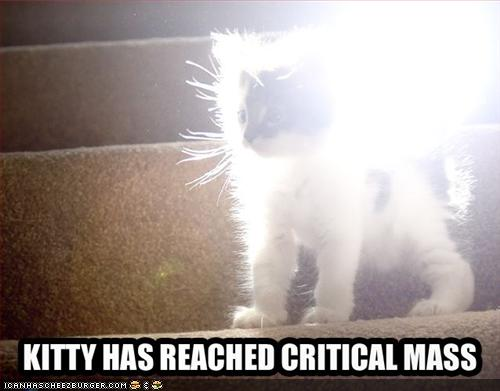 funny-pictures-cat-reaches-critical-mass